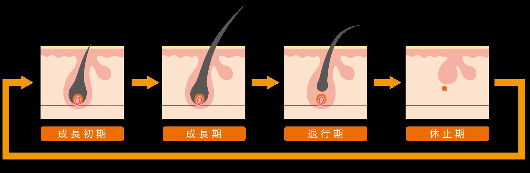 脱毛の毛周期